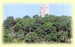 torre baccelli
